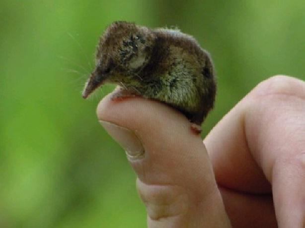 animal mini 5