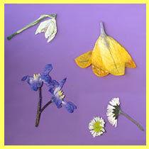 pressed_flowers