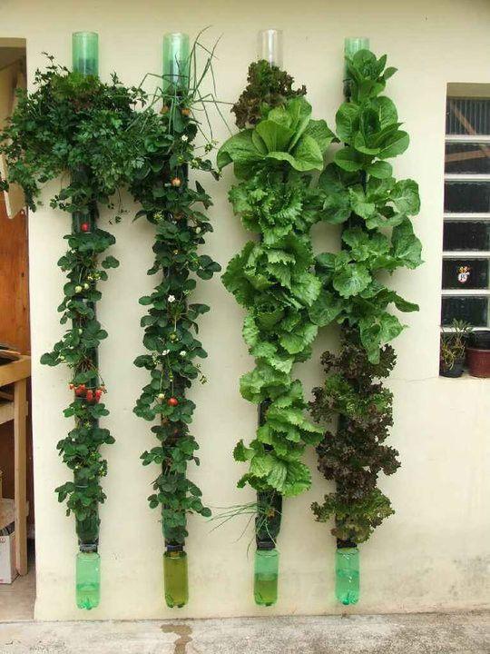 vegetal-13